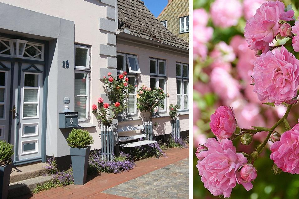 Holm Schleswig Rose Relana Dombetzki ALDO Magazin